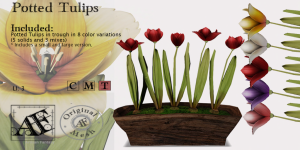 AFAD_Tulips